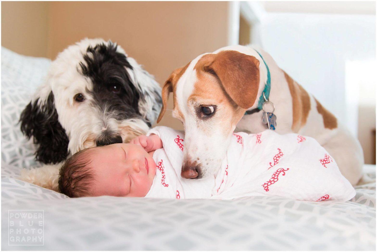 pittsburgh lifestyle newborn photographer in home newborn baby session pink baby girl